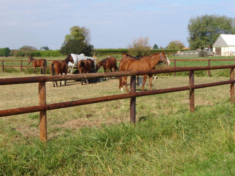 Clôture pour chevaux Caen, Le Havre, Alençon, Calvados, Normandie | Closystem